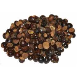 Guaraná semillas