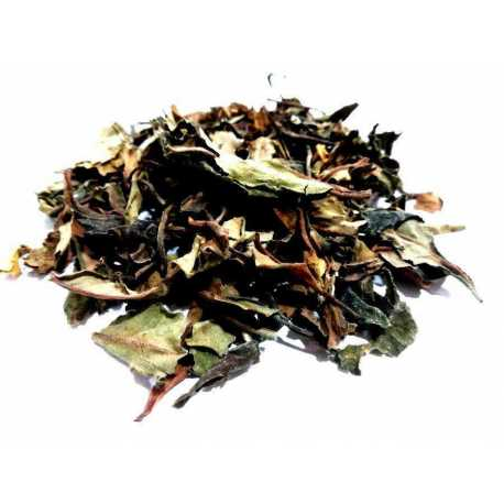 White tea China Pai Mu Tan